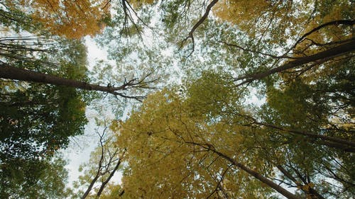 Low Angle View of Trees and Branches