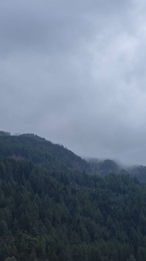 Time-Lapse Video of Foggy Mountain Forest
