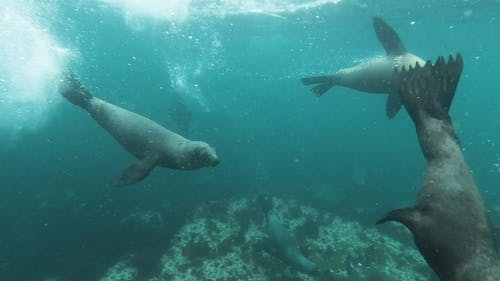 Close-Up View of Sea Lion Swimming Underwater