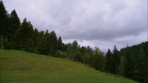 Grass And Trees In The Mountain Forest