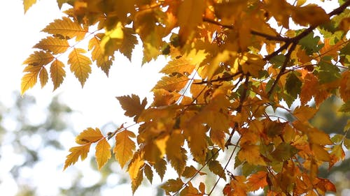 Close Up Footage of Fall Leaves