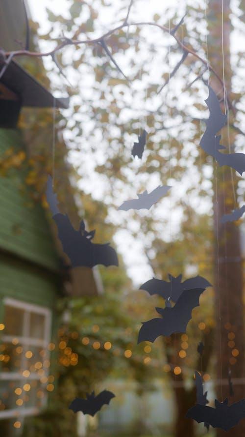 Video of Halloween Decors Hanging