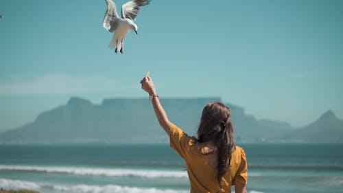 Woman Feeding the Seagulls