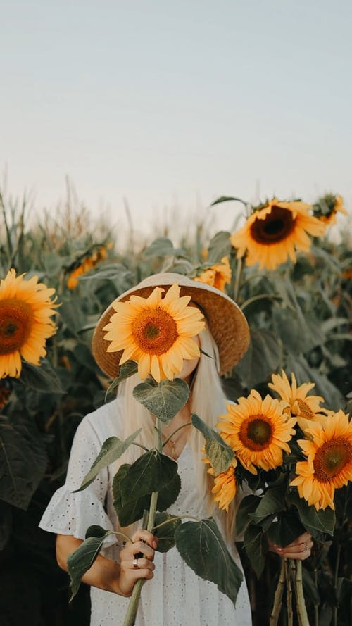 Woman Holding Sunflowers on a Field