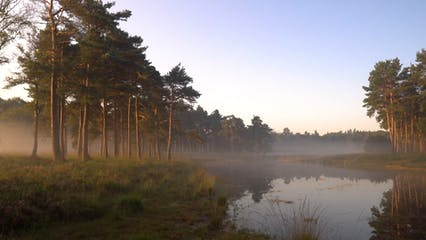 Misty Morning In A Natural Environment