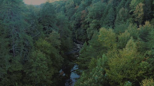 Aerial Footage of a River in the Forest
