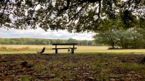 A Wooden Bench Overlooking An Open Field