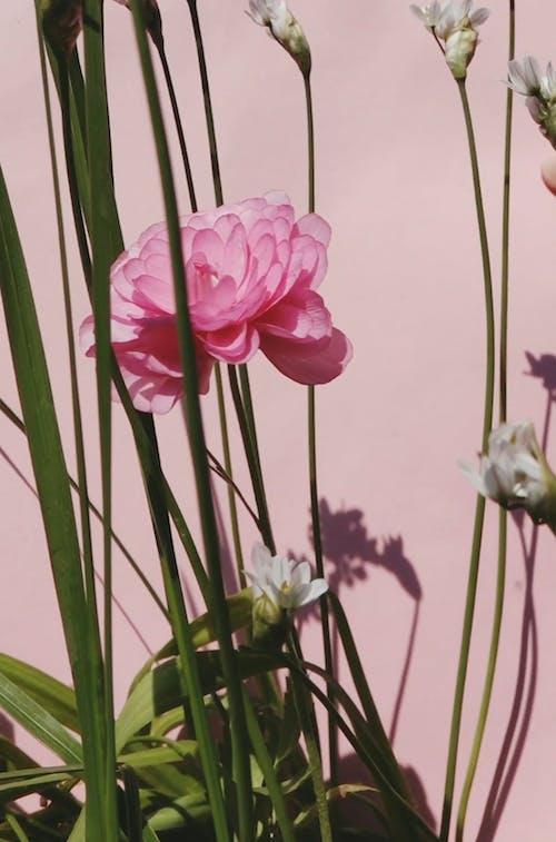 Blooming Flower  In Plants
