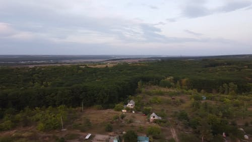 Drone Footage of Tree Forest