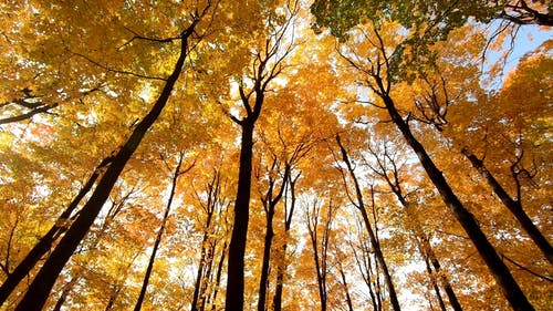 Color Of The Forest In Autumn