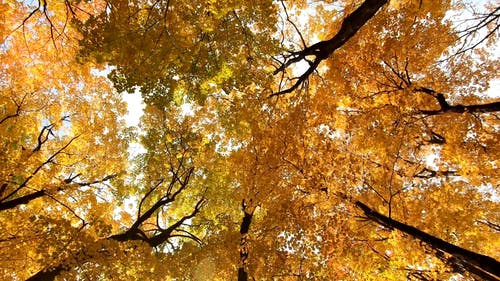 The Autumn Colors Of The Forest