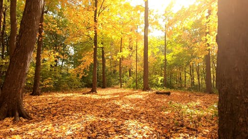 The Forest Ground Covered In Fallen Leaves