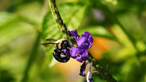A Bee Feeding On Nectars