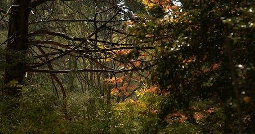 Trees Loosing Leaves In Autumn