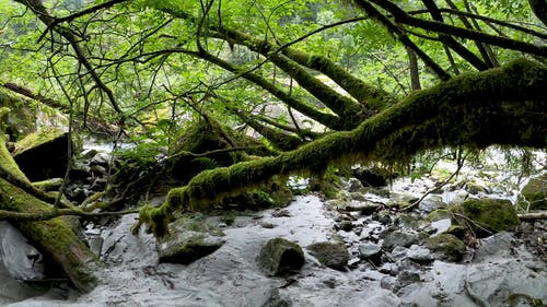 A Forest Covered In Green Mossy Plants