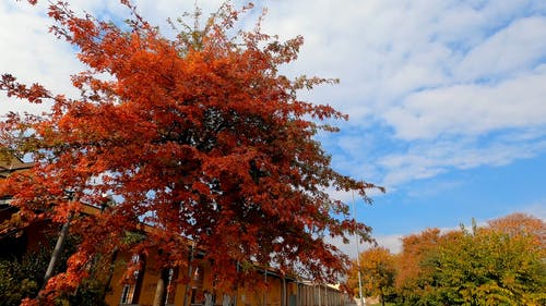 The Coloful Leaves Of A Tree In Autumn