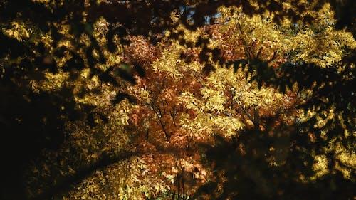 Swaying Autumn Trees