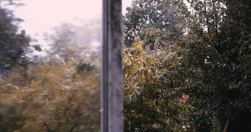 A Tree Wet With Rain