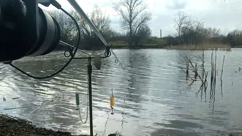 Fishing Lines Placed in a Lake