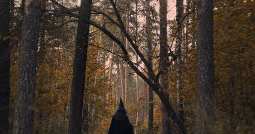 A Witch In The Forest