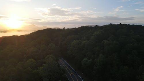 Aerial Footage of Trees