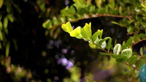 Droplets of Rain Falling on Green Leaves
