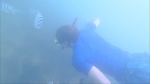 Man Wearing Blue Shirt Snorkeling Under the Sea With Fishes