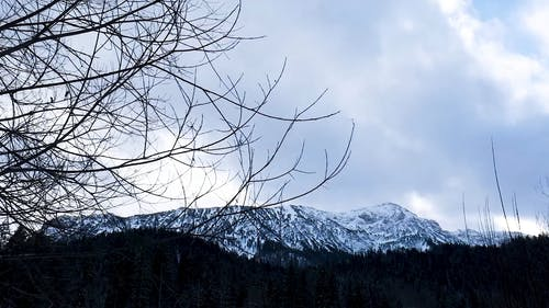 Close Up Video of Tree Branches Over Snow Covered Mountain