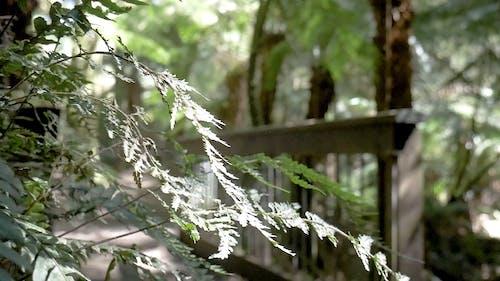 Empty Pathway in the Woods