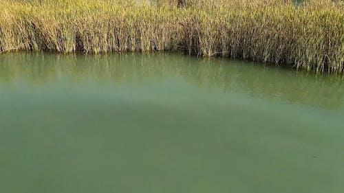 Vegetation in Lake Shore