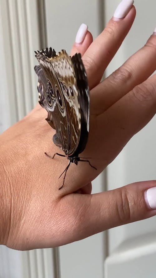 Close Up Video of a Butterfly