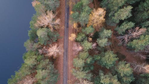 An Aerial Footage of a Road between a Forest and a Lake