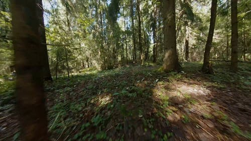 Aerial Footage in the Woods with Motorcyclists