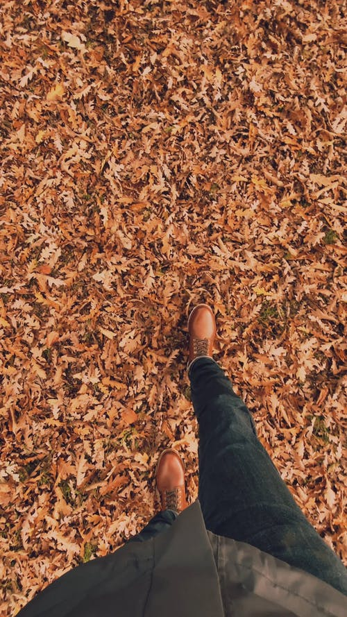 Walking in the Autumn Leaves