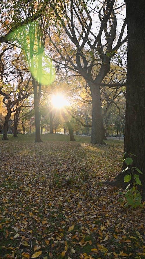 Park in Autumn