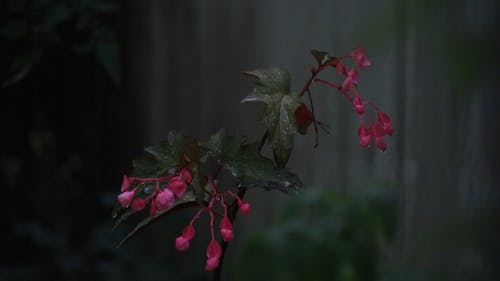 Close-Up Video of a Plant on a Rainy Day