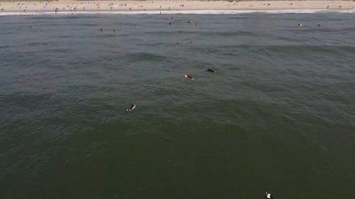 Aerial Footage of People on the Beach