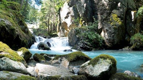 Beautiful Forest Cascade