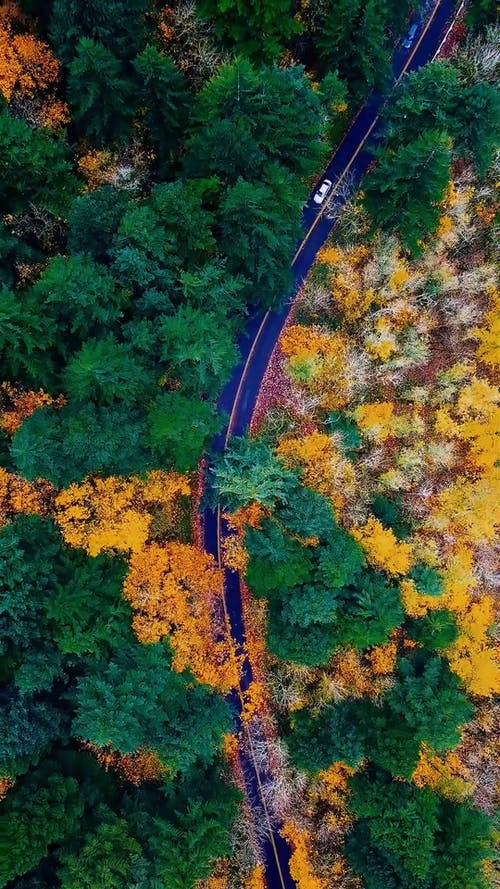 A Road Among the Woods Seen From Above
