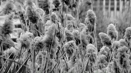 Monochrome Close-up of Dry Grass
