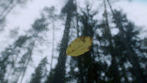 A Leaf on a Glass