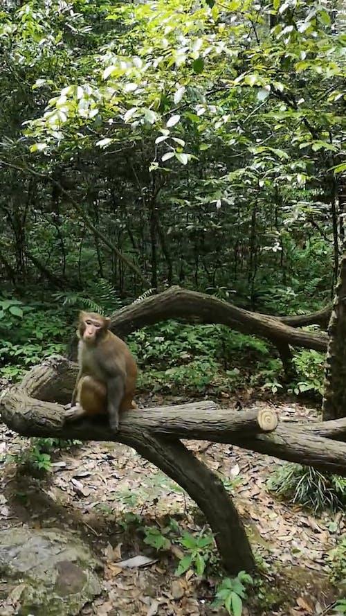 Monkeys Roaming In The Forest Park