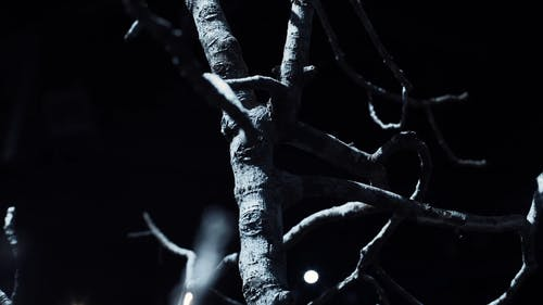 Close-up Footage Of A Leafless Tree Branches