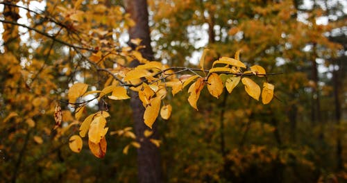 Close Up View of Yellow Leaves