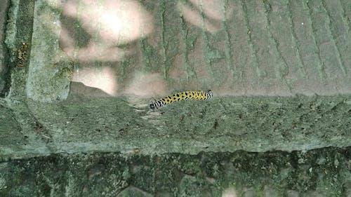 Close-up Shot of a Caterpillar