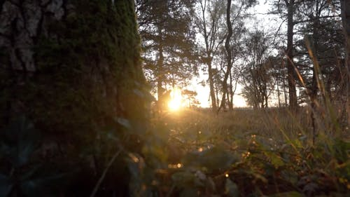 Sunset Rays Behind the Forest Trees