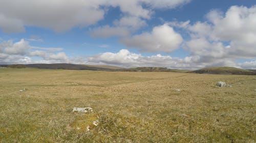 A Time-Lapse of a Grassland