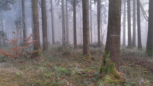 A Foggy Forest