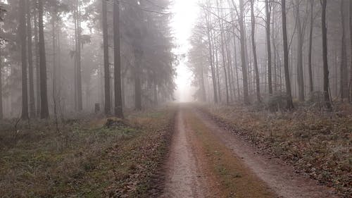 A Road in the Woods Under Fog