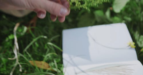 A Person Cutting and Sticking a Small Sprig on a Page
